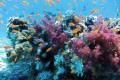 Sognare i pesci, significato ed interpretazione